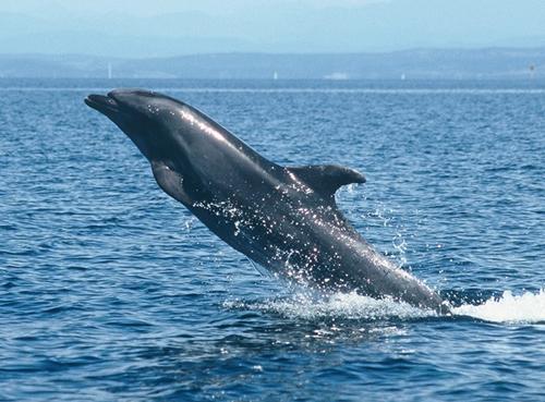Delfin Slike